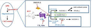 SMase inhibitors synergistically increase the neuroprotective effects of β-Caryophyllene